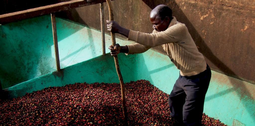 Африканский кофе в зернах – как выбрать и купить лучший? Эфиопия, Кения, Танзания, Уганда: отличия вкуса и отзывы экспертов