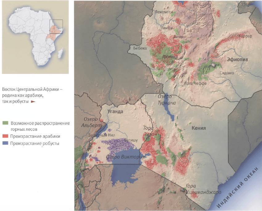 География произрастания арабики робусты