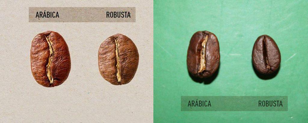 зерно Арабики и Роубсты