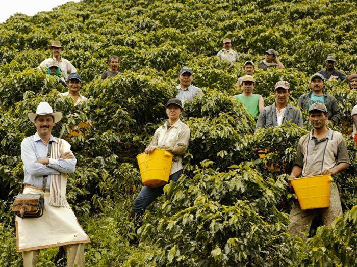 сборщики урожая в колумбии