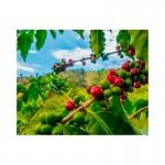 Montana Coffee Колумбия кофе в зернах 500 г