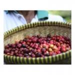 Montana Coffee Блю Маунтин Ямайка в зернах 500 г