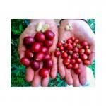Montana Coffee Марагоджип в зернах 500г
